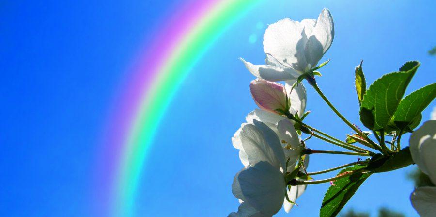 Lotgenotengroep Rouwenden 'Onder de regenboog'