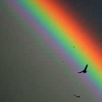 Lotgenotengroep Rouwenden 'Onder de regenboog' @ Inlooppunt Oisterwijk  | Oisterwijk | Noord-Brabant | Nederland