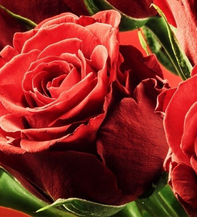 Het Geheim van de Liefde II